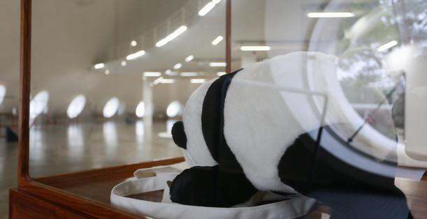 Raiz Weiwei - Foto Fred Uehara-SP24h (48