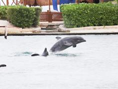 Show de Golfinhos (8).jpg