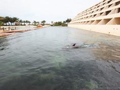 Show de Golfinhos (3).jpg
