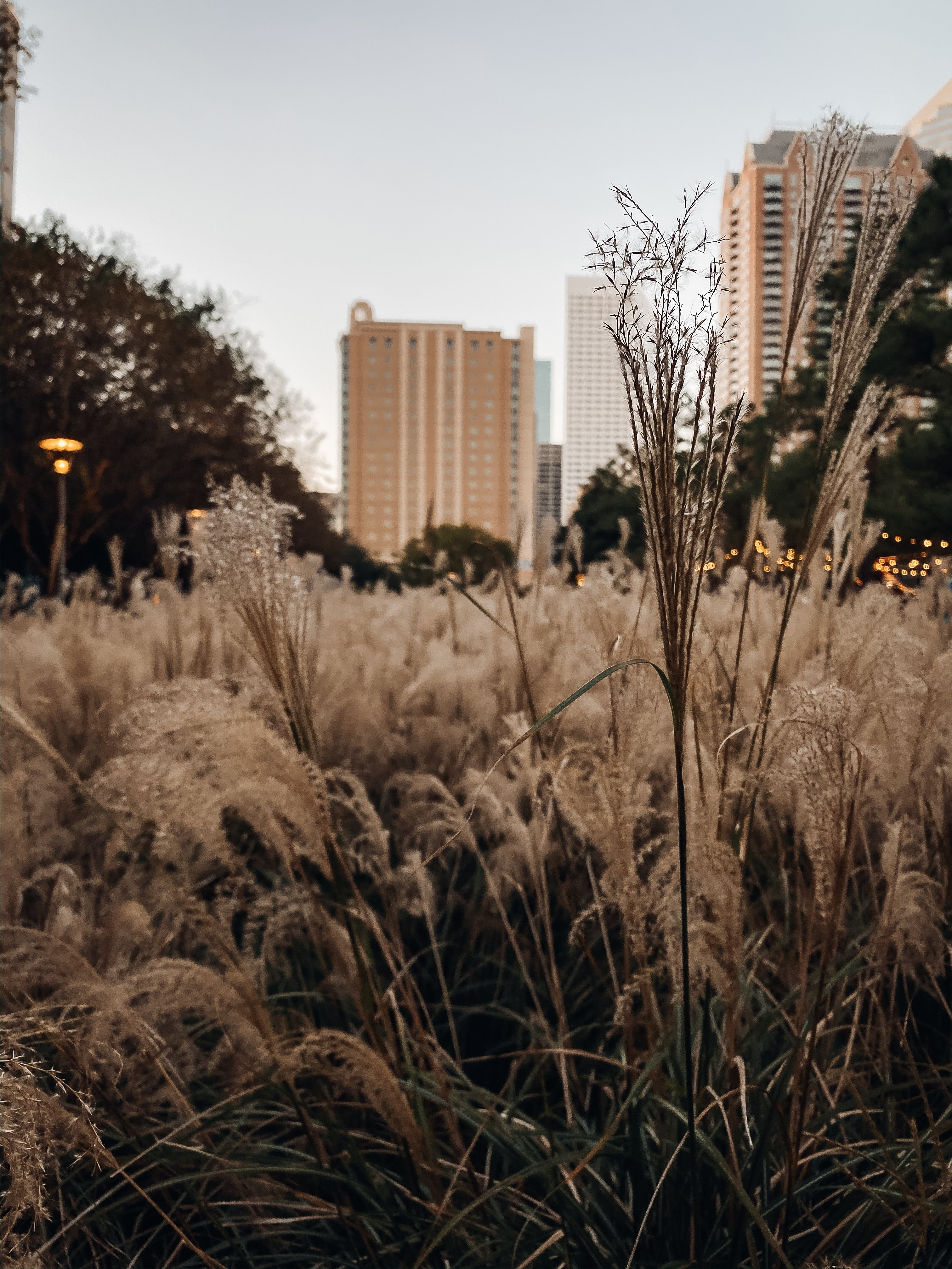 Dowtown Houston | Discovery Green | Travel Destinations