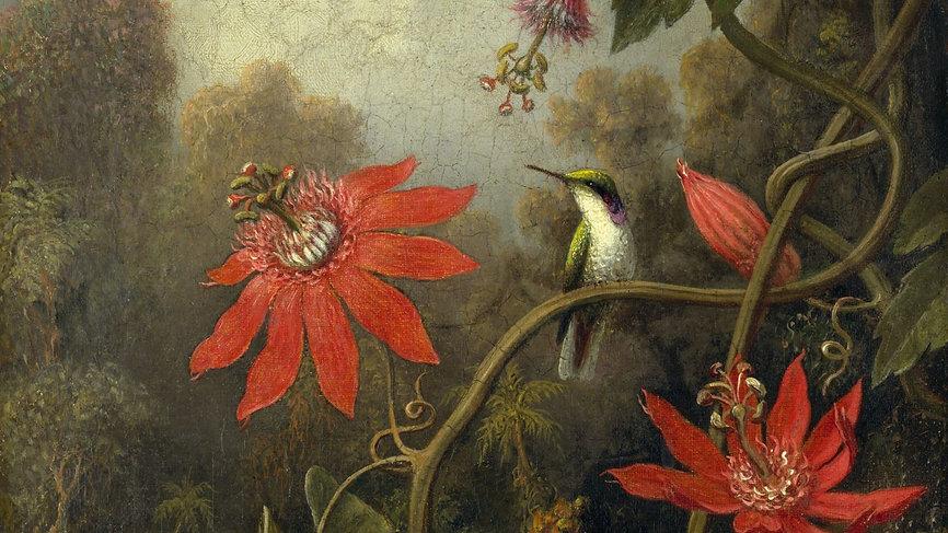 Bird-1920x1080.jpg