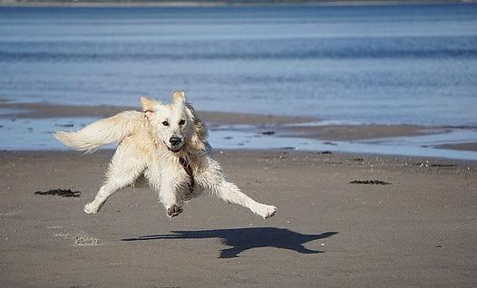 partir à la mer avec son chien