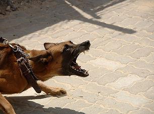 castrer un chien agressif