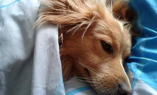 chien malade.jpg