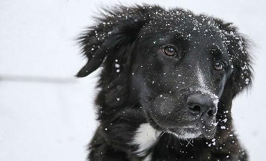chien à la neige