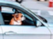 voyager en Europe avec son chien