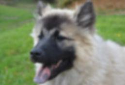 mon chien a la langue bleue.jpg