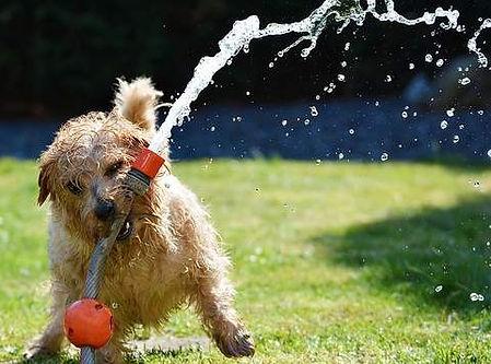 laver son chien avec un cerceau