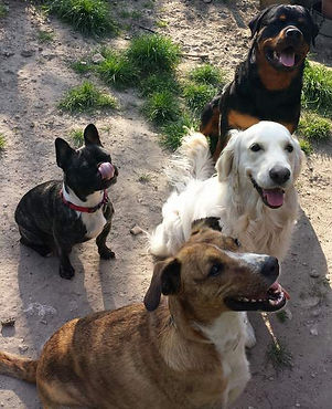 chiens en pension familiale.jpg
