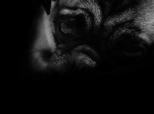 chien depressif