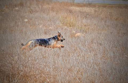 mon chien fugue.jpg