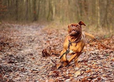 chien hyperactif.jpg