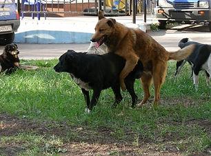 mon chien grimpe les autres chiens