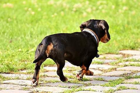 pourquoi mon chien fugue.jpg