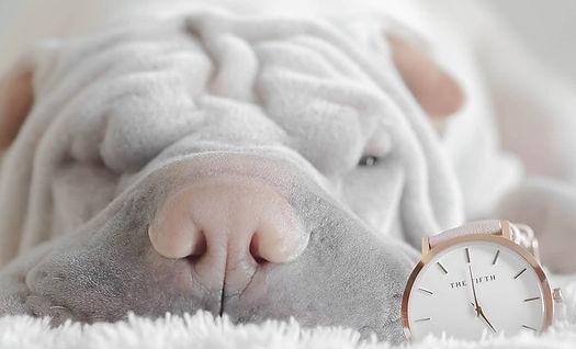la notion du temps chez le chien