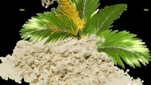 Пальмовая пыльца 100 гр
