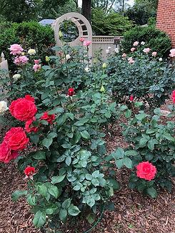 Rose garden May 17 2020.jpg
