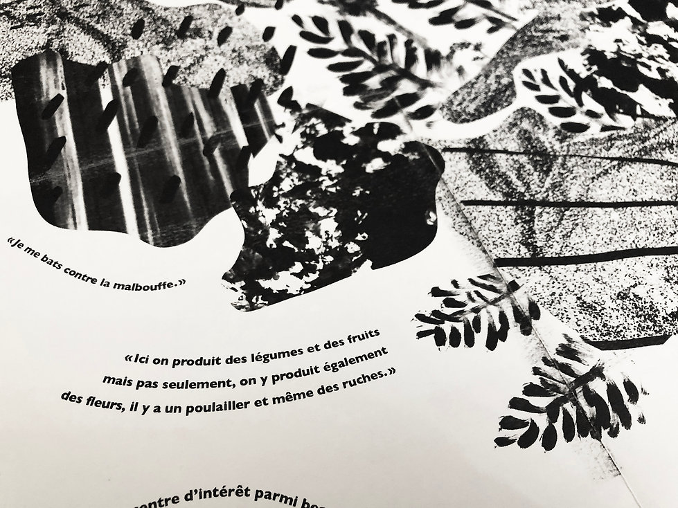 Jardin_carte_illustration_article_histoi