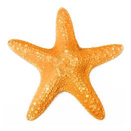 Starfish (S).jpg