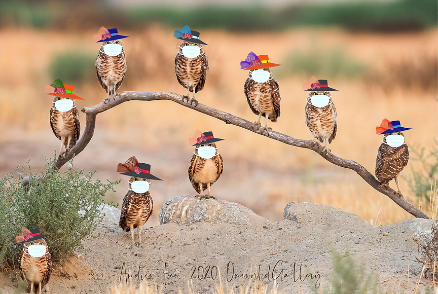 OwlsWithMasks_andrewlee@0.5x.png