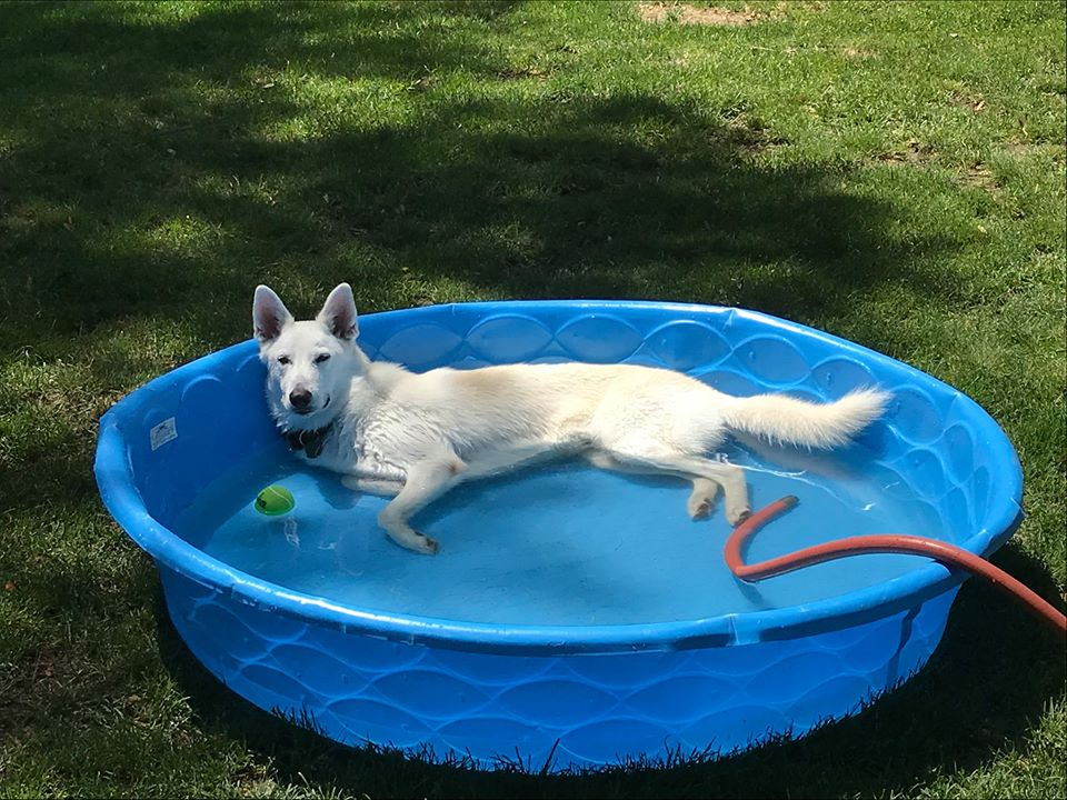 CharlieTX in his pool