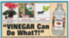 Vinegar (1).jpeg