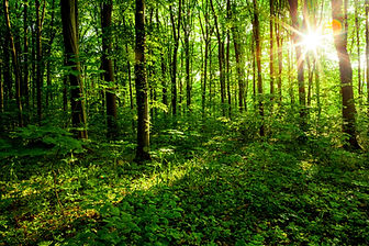 bigstock-forest-trees-nature-green-woo-8