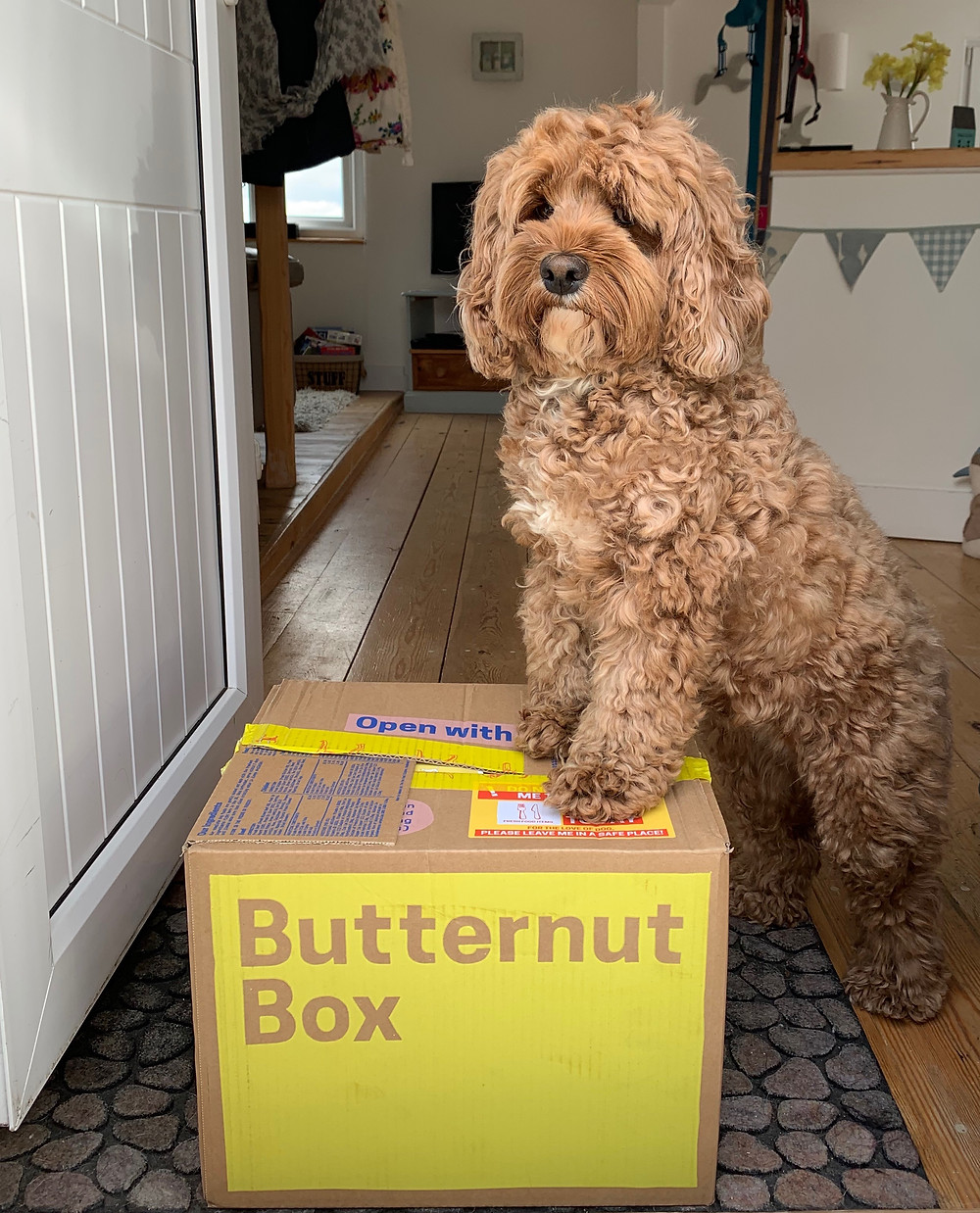 Little Rea's Butternut Box Delivery - Making herself at home!