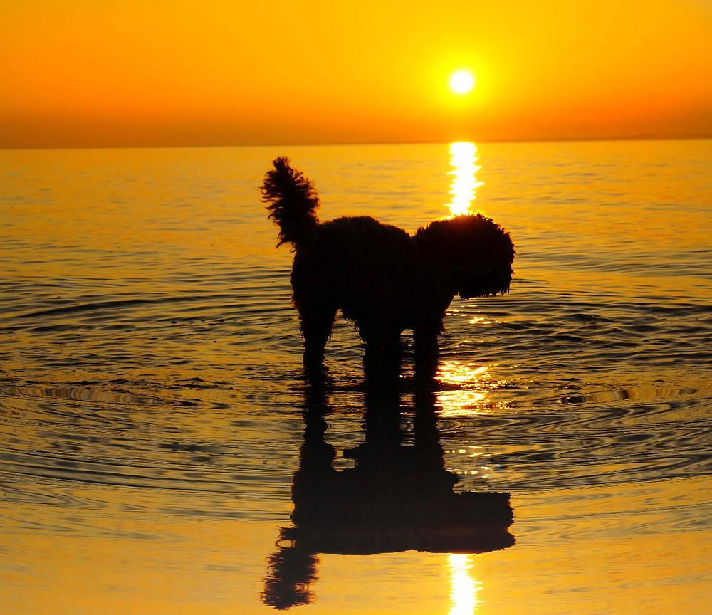 Little Rea & Gurnard Sunset
