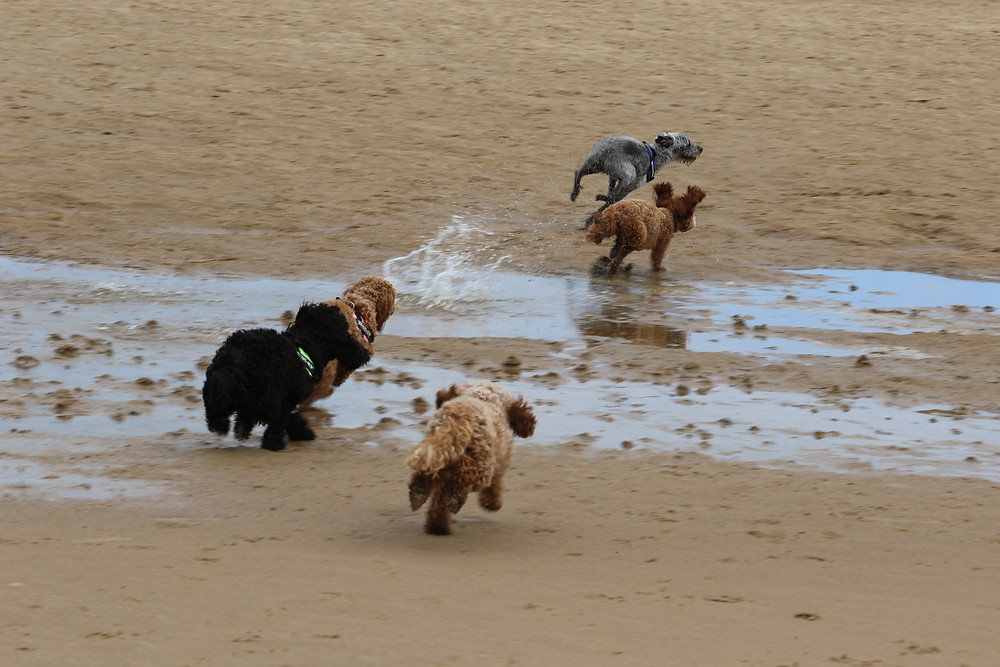 Me and my Siblings at Holkham