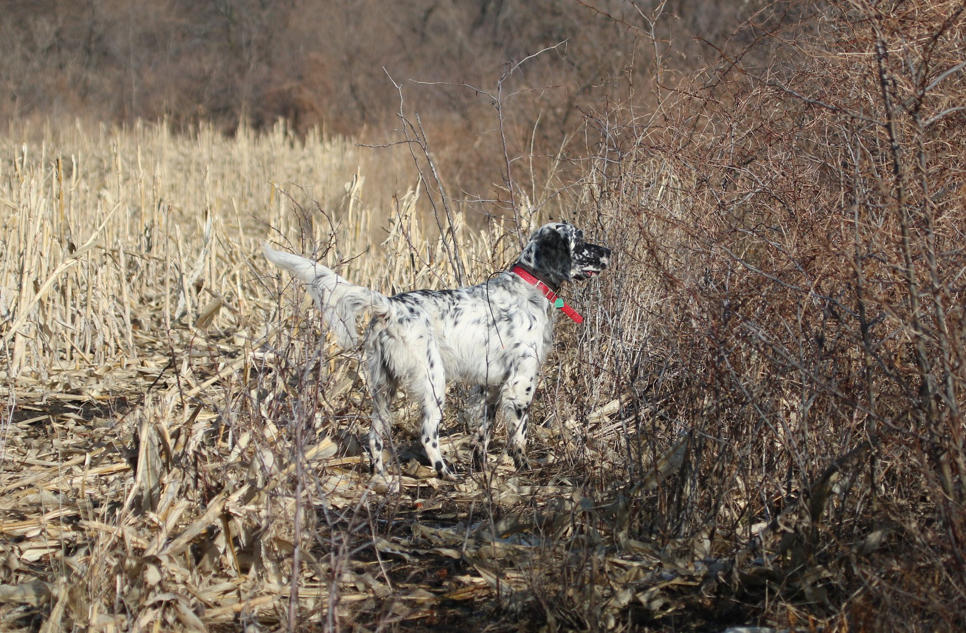 Sugar Creek Scout, photo compliments of Fran Thompson