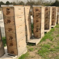 Texas Honey Bees