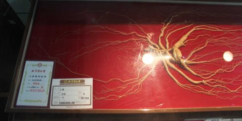 The $600K Ginseng Root