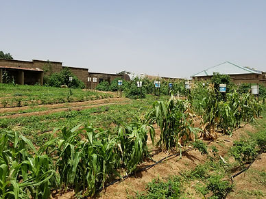 Agriculture Plots
