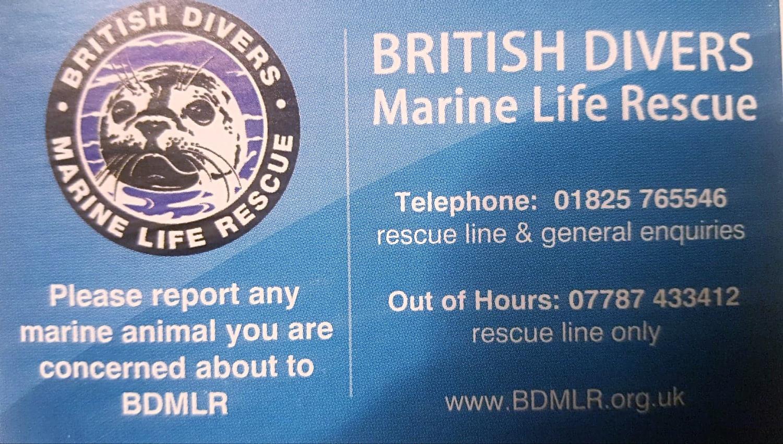 BDMLR Contact details