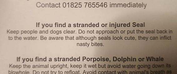 Marine Mammal first aid