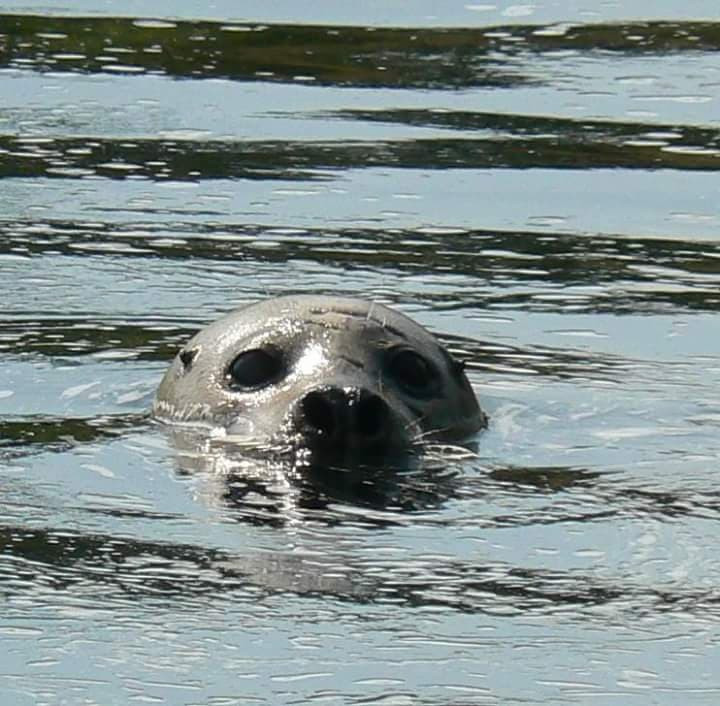 Swaley Seal