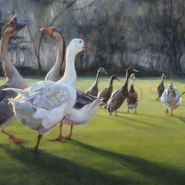 POULTRY ON THE LAWN