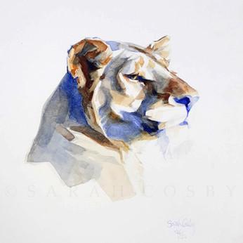 LIONESS 2