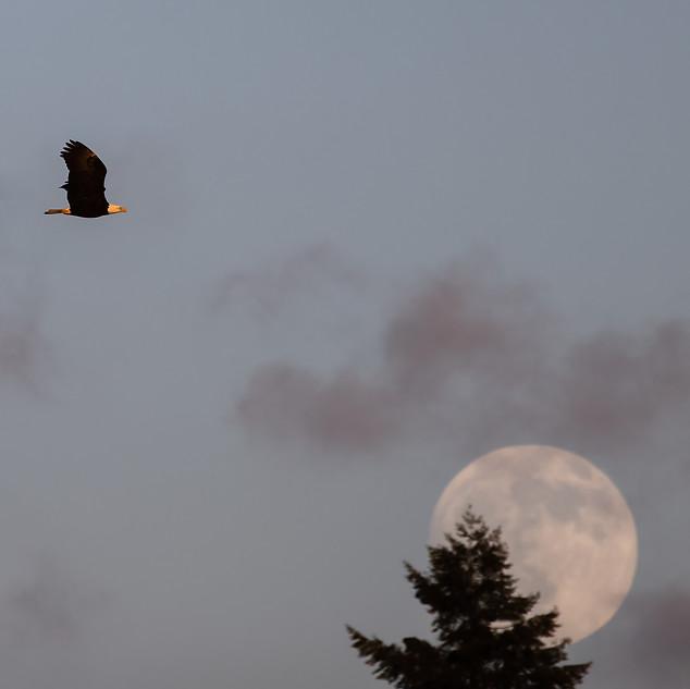 Eagle + Moon