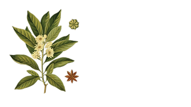 kisspng-sassolino-star-anise-illicium-an