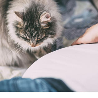 Chats, chiens, poils d'animaux...
