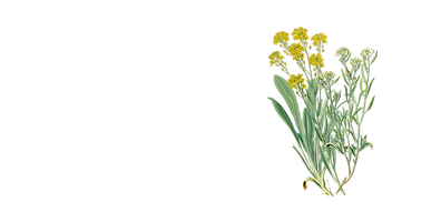 gravure_de_fleur_de_jardin_0063_corbeill
