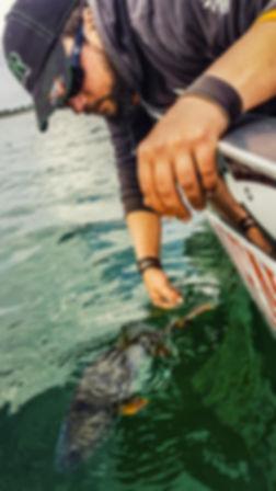 Stage pêche des carnassiers moniteur guide de pêche fishing aventure Haute-Vienne