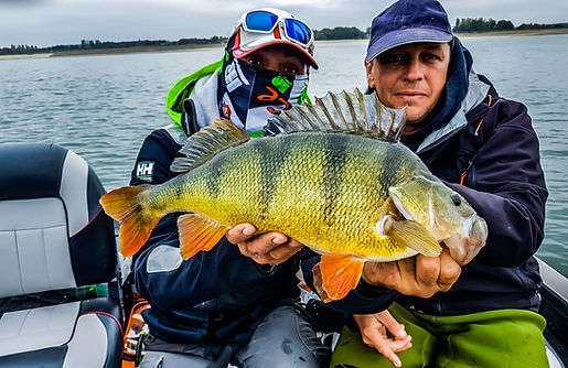 Perche record moniteur guide de pêche en bateau fishing aventure