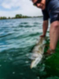 Relache grand brochet lac forêt d'orient guide de pêche fishing aventure