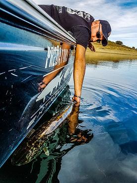 Extremadura Pêche en espagne avec Cédrick plasseau oniteur guide de pêche en Estrémadure, Brochets, Black Bass, sandres, Barbeaux