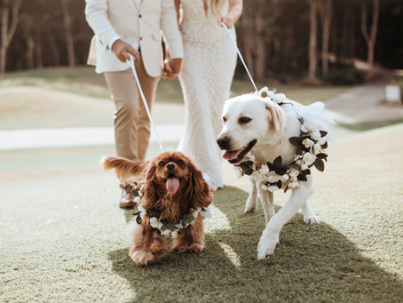 Best Practices to Include Your Dog at Your Wedding