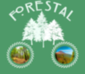 cheap tour TEIDE cheap trip forestal excursion