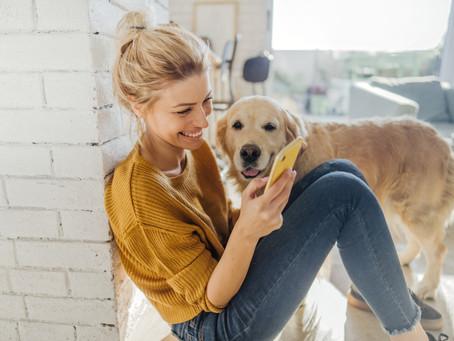 PETTALK, l'éducation canine en ligne